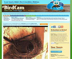 #BirdCam