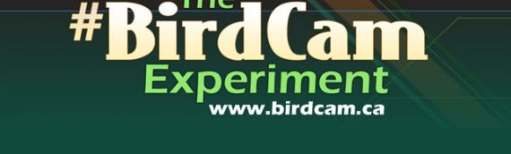 The #BirdCam Social Media Experiment Final Recap