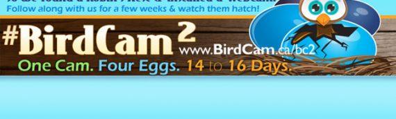 #BirdCam: Social Media Experiment Part 2