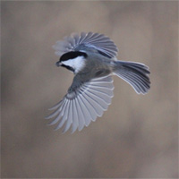 Birds In Flight - Small